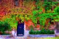 Italy, Venice, doors, fall colors, fall foliage, leaves, windows and doors