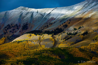 fall colors, golden aspens, aspens at altitude, frost line, timber line,