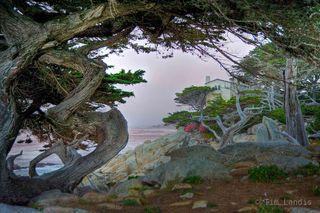 Monterey peninsula , just north of Pebble beach golf course