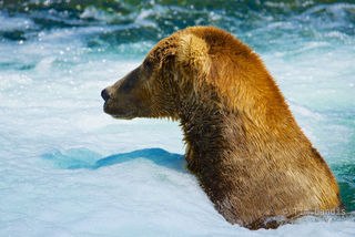 hot tub grizzly, grizzly fishing,