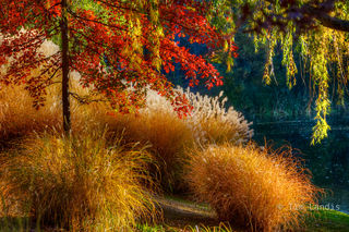 Red Oak and Grasses