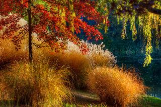 Oak tree in autumn, grasses,