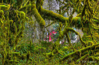 Red Barn in Forest, rainforest