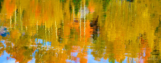 On golden pond, yellow and orange aspens