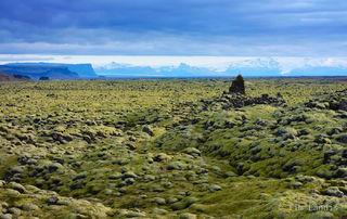 Moss landscape, lava fields, Iceland