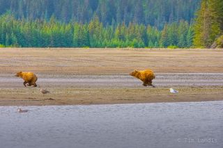 Clark NP, grizzly defends territory