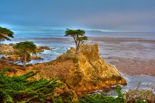 17 mile drive, Carmel, cyprus point, kelp, pelicans, the point, the tree