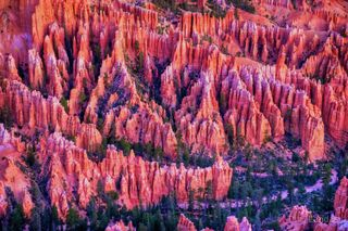 Bryce, Utah, hoodoo, hoodoo alpenglo, hoodoos, predawn hoodoos, reflecting the dawn, the glow, the glow in Bryce