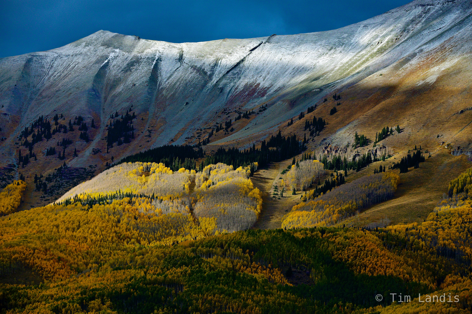 fall colors, golden aspens, aspens at altitude, frost line, timber line, , photo