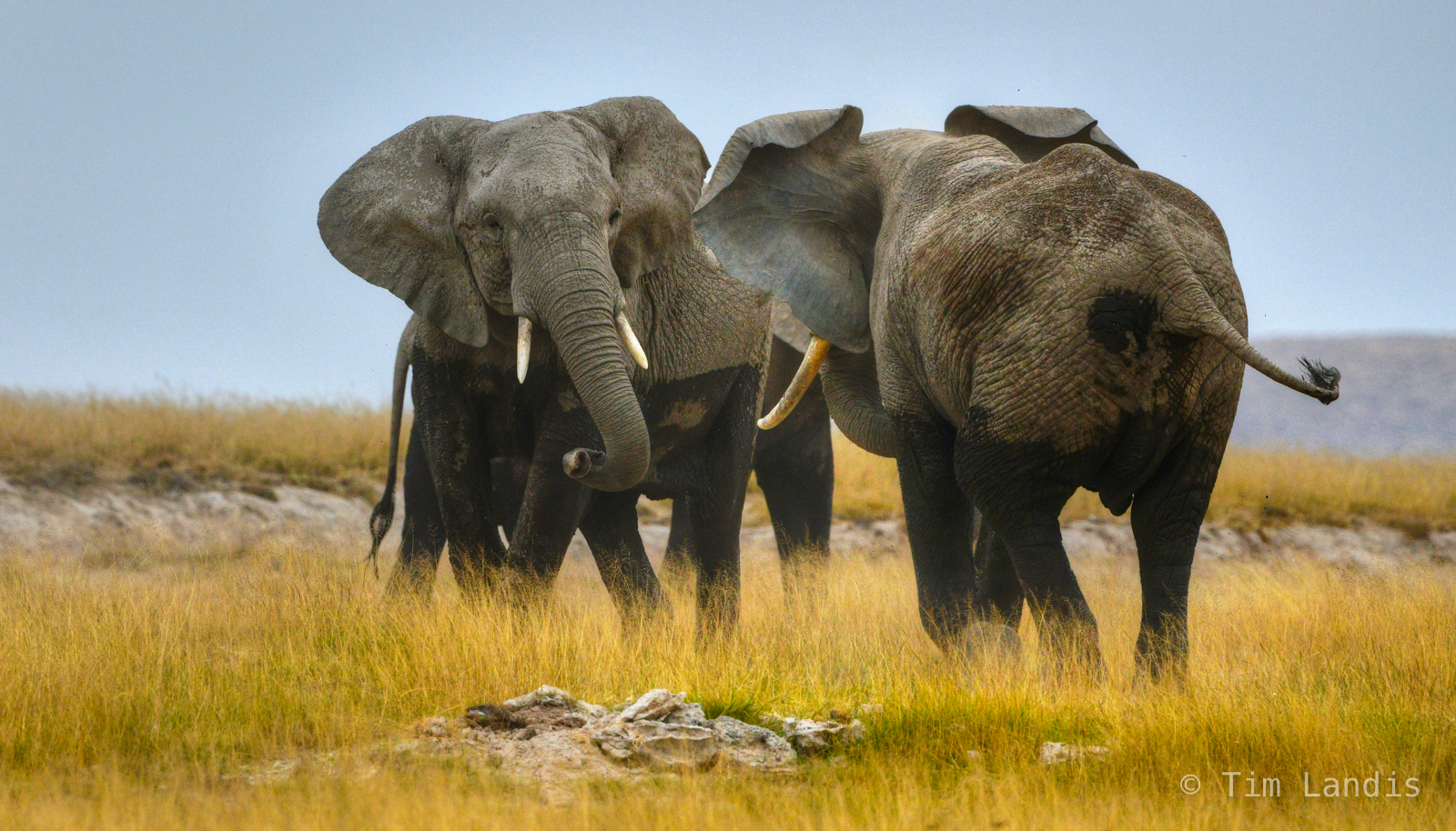 Two elephants size each other up.