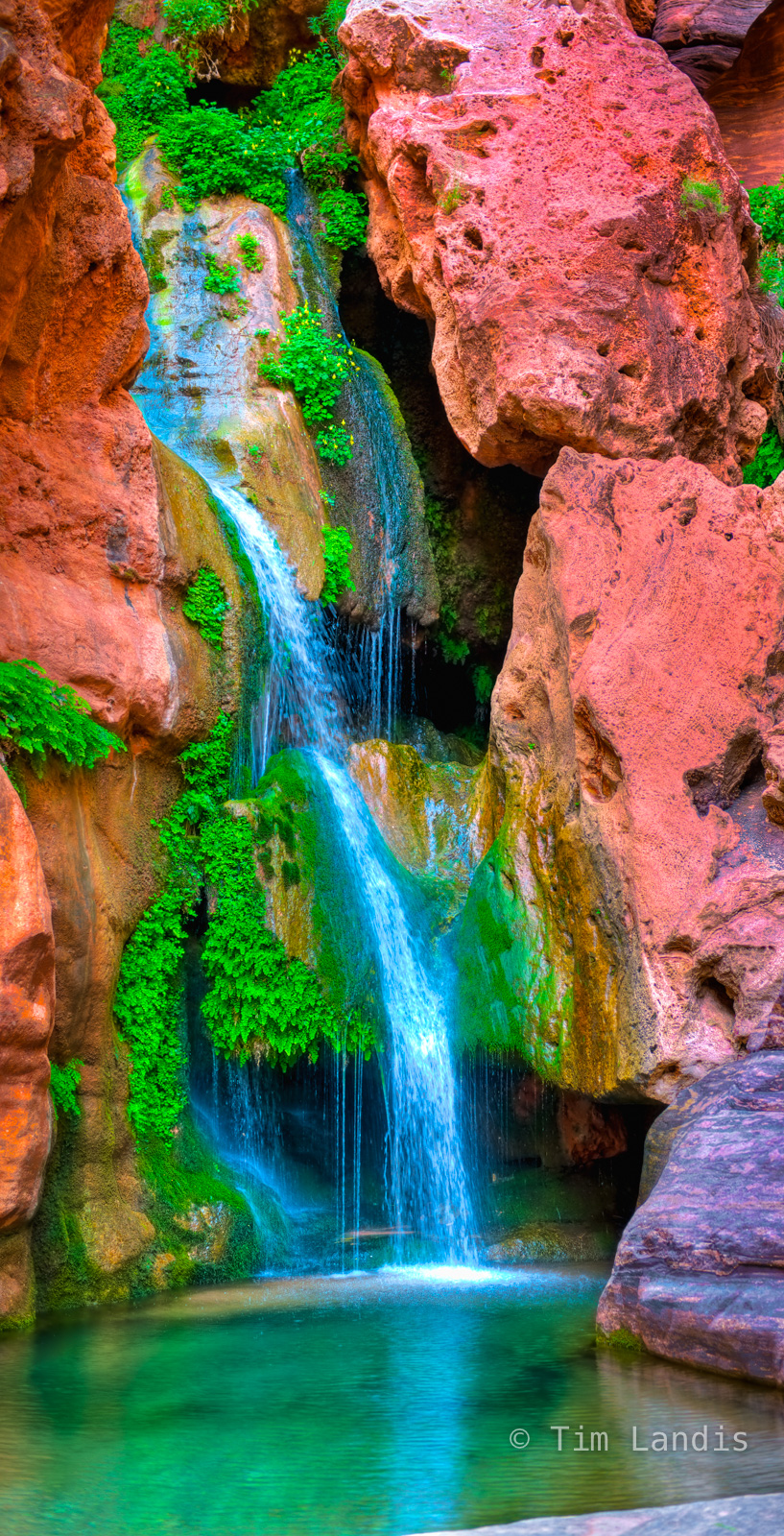 Colorado River, Elves Chasm, Grand Canyon NP, May, cascade, ferns, moss, red rocks, reflections, spring, waterfall, wildflowers, photo
