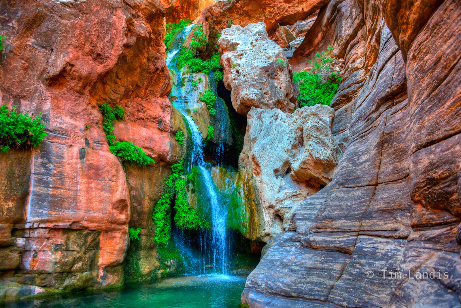 Colorado River, Elves Chasm, Grand Canyon NP, Western Rivers, ferns, maiden hair ferns, rafting, waterfalls, photo