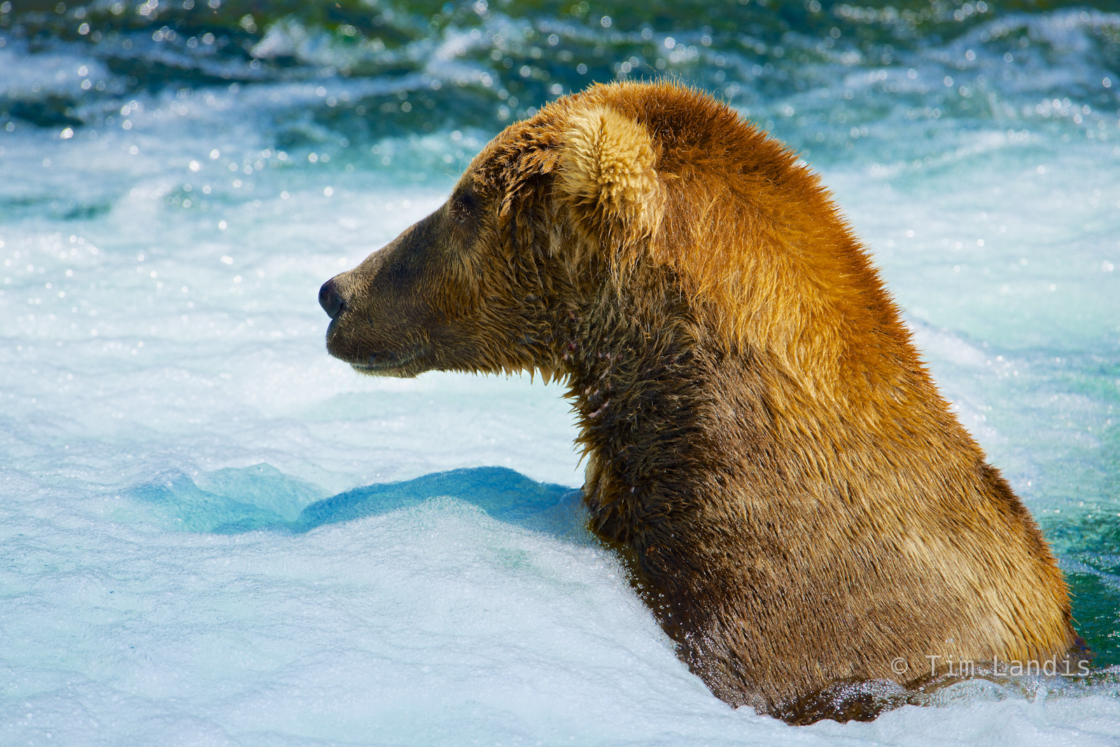hot tub grizzly, grizzly fishing, , photo