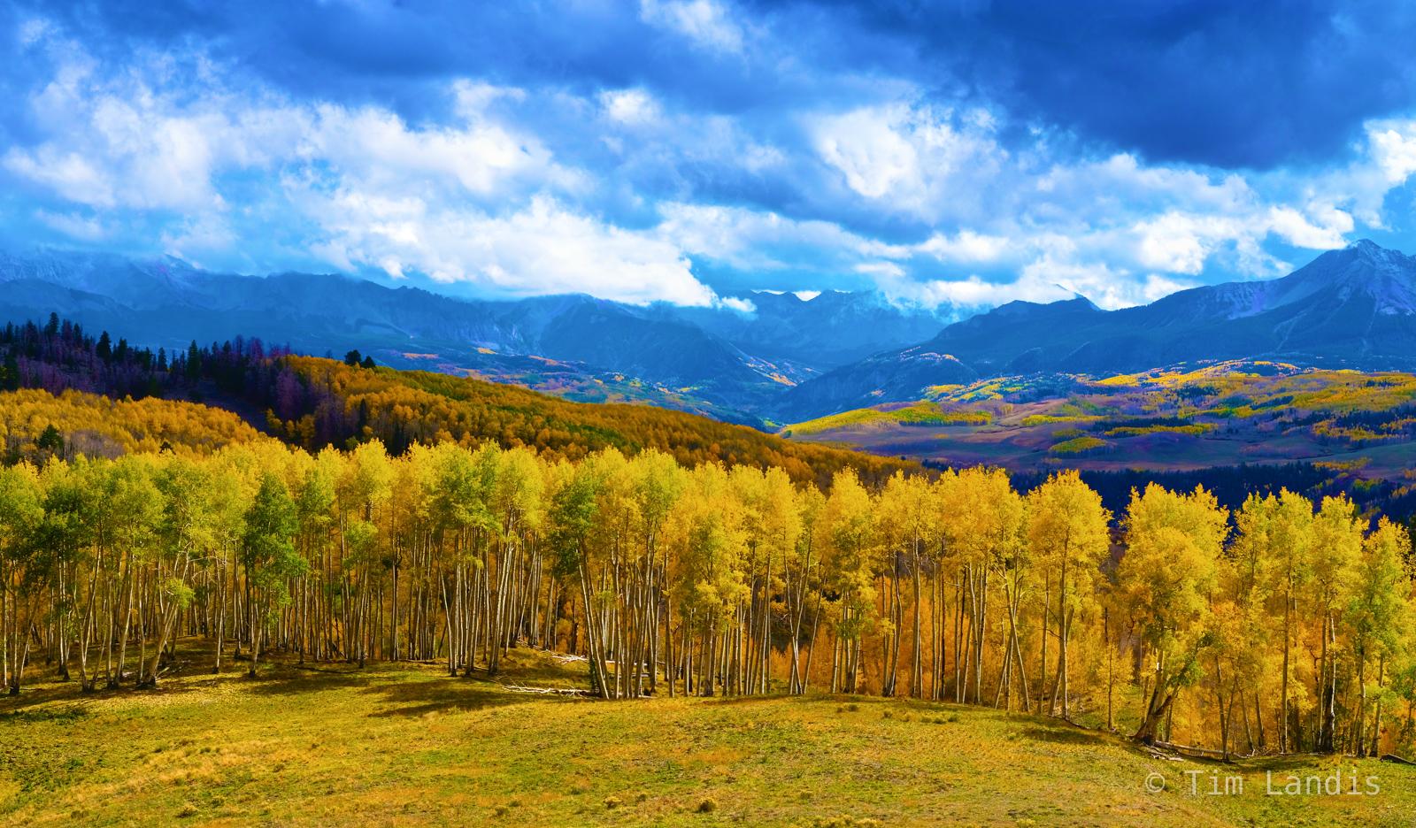 Aspen, aspens, colorado, meadow with aspens, telluride, photo