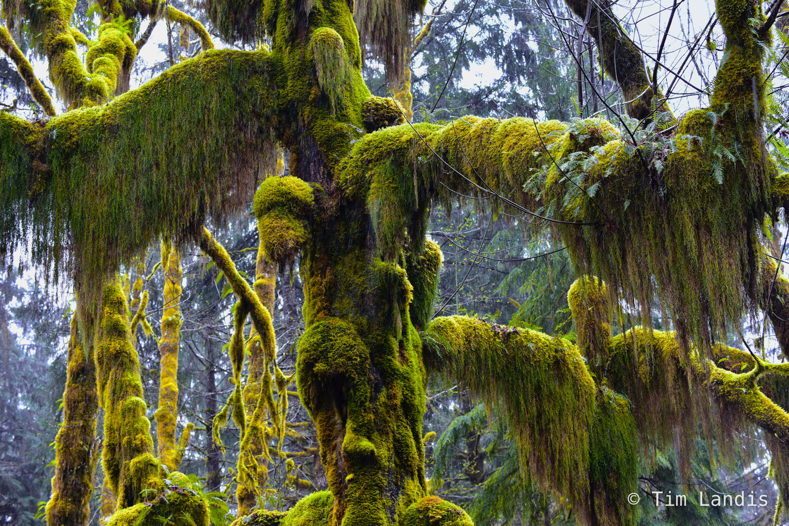 epiphytes, green, moss, rainforest, photo