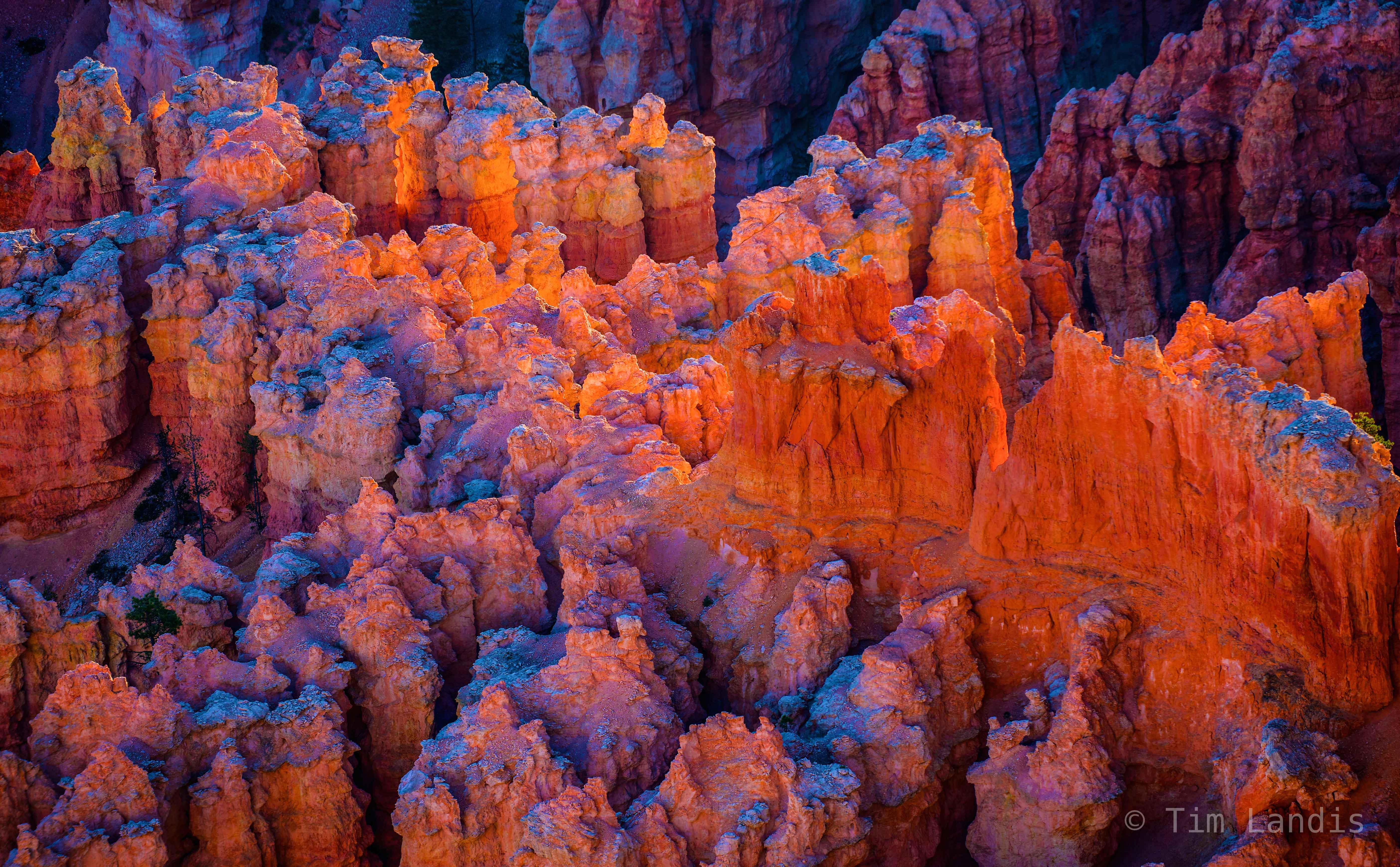 Bryce, Utah, hoodoo, hoodoo alpenglo, hoodoos, illumination, reflectance, reflecting the dawn, shadows, the glow, the glow in Bryce, photo