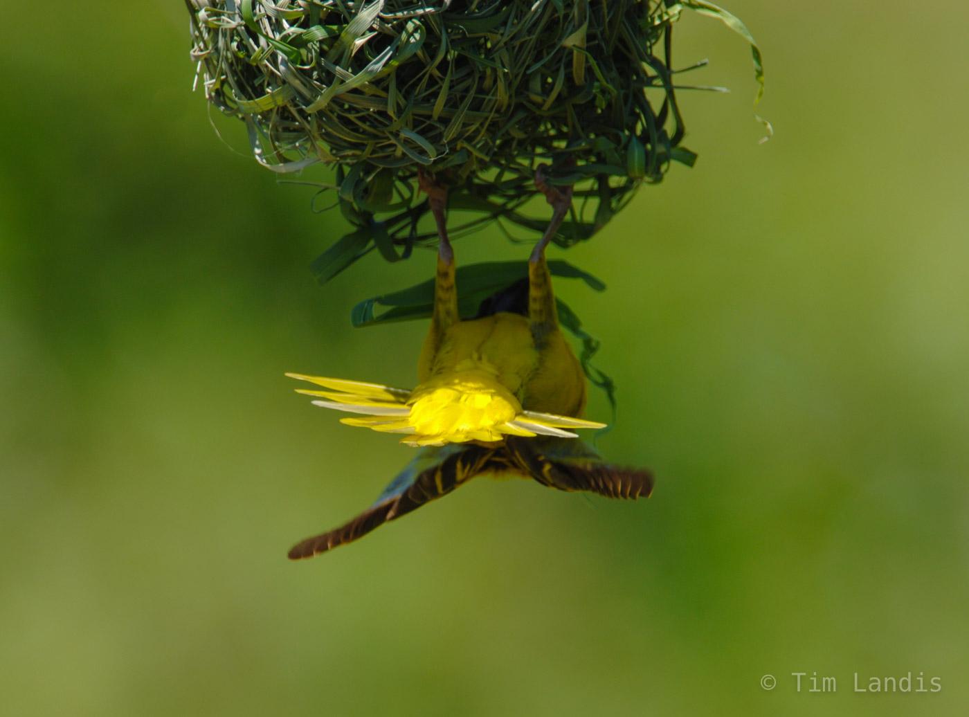 nesting, photo